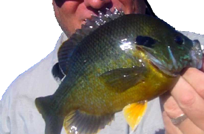 Catch Of The Day Sunfish, Crappies, Bluegill in DuPage