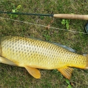 Biggest carp on the fly yet!