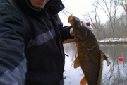 COTD - Mid Winter Carp Action in Naperville